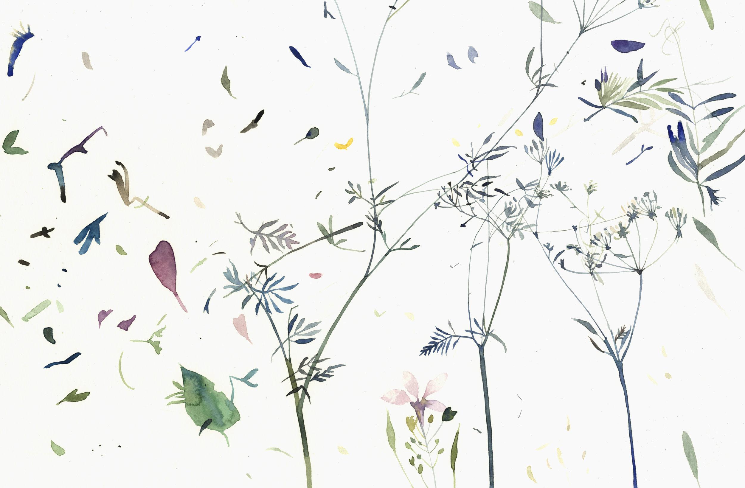 Pressed flowers 2.jpg
