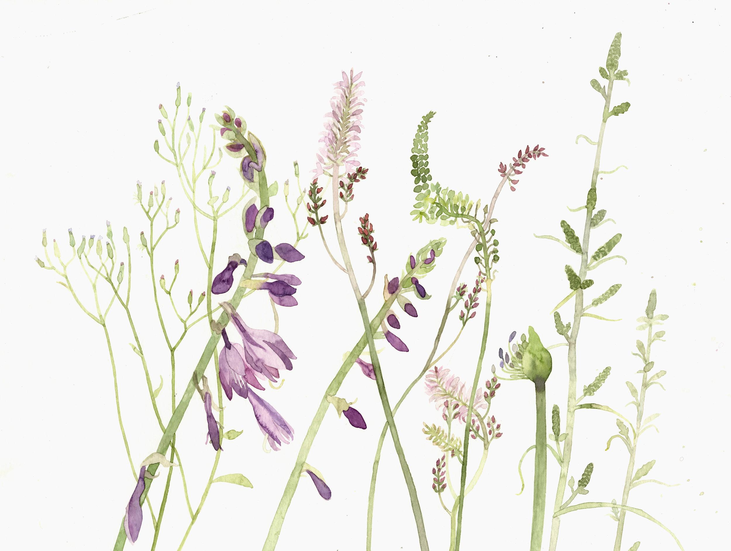 Bristol Botanical garden Lindsay McDonagh.jpg