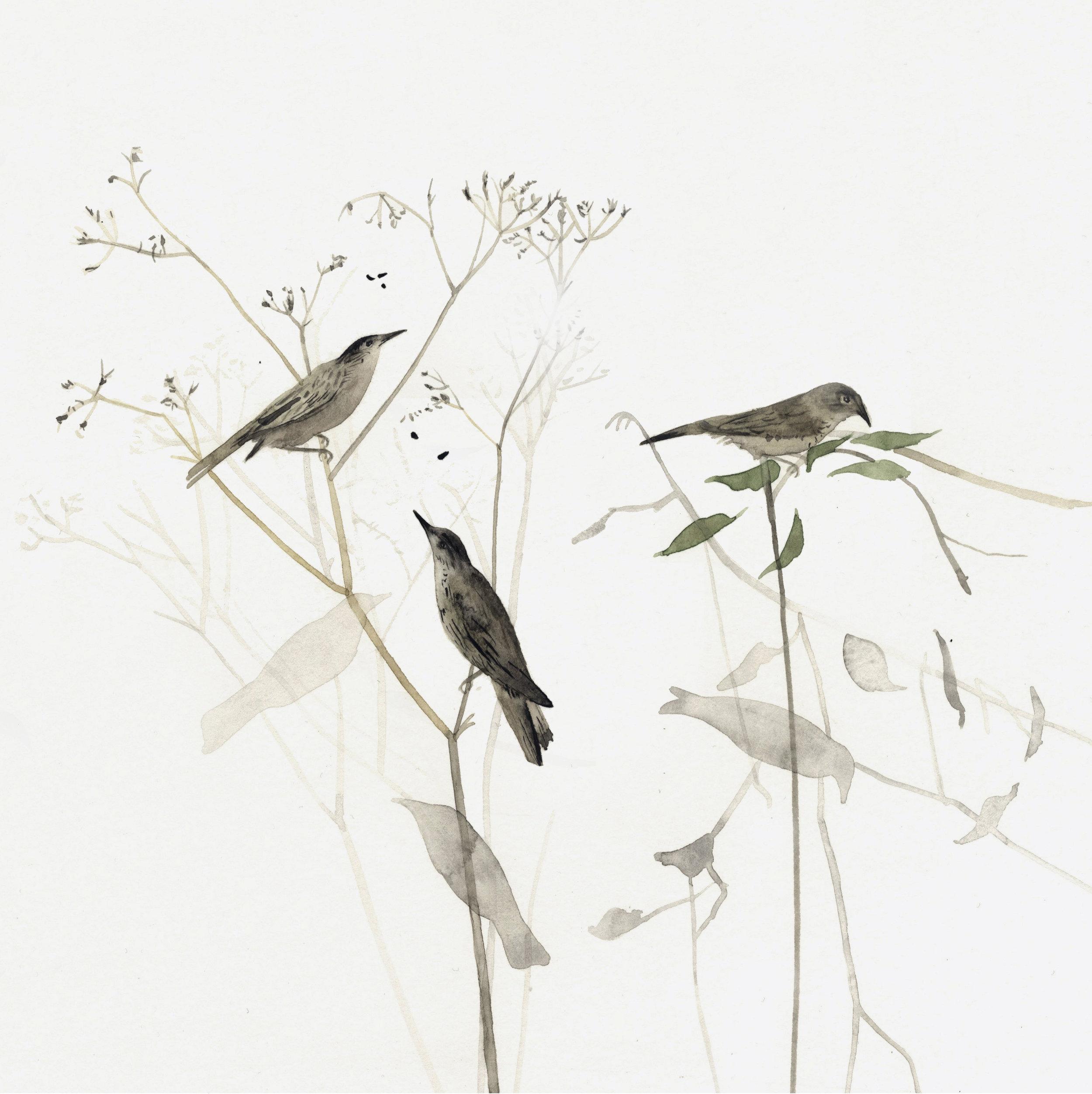 Three birds by Lindsay McDonagh.jpg