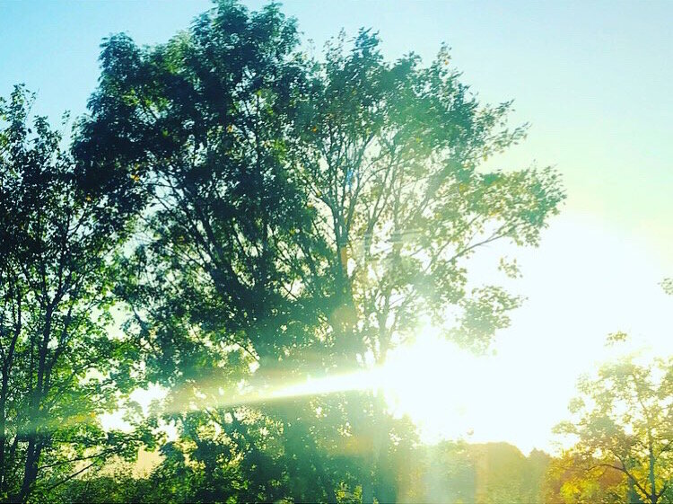 trees by Lindsay McDonagh