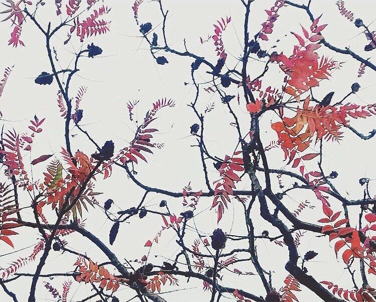 Autumn tree Lindsay McDonagh