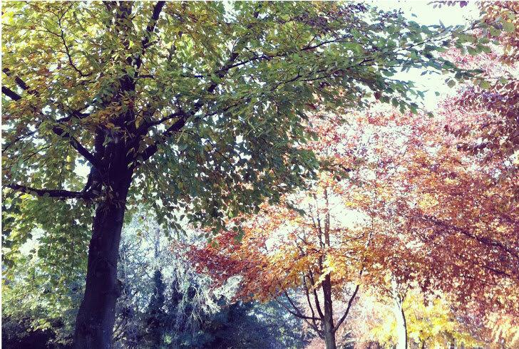 Autumn tree colours Lindsay McDonagh