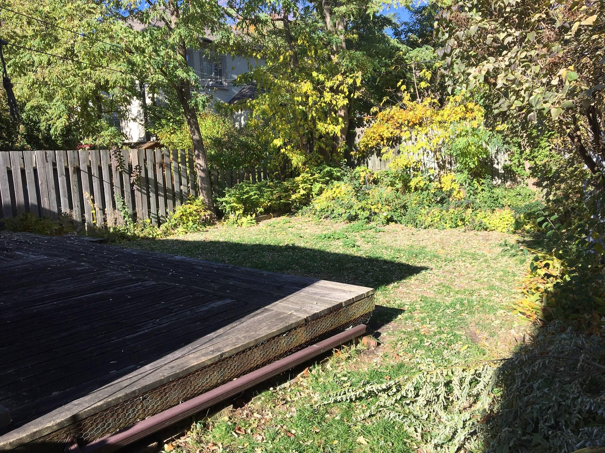 340 backyard.JPG