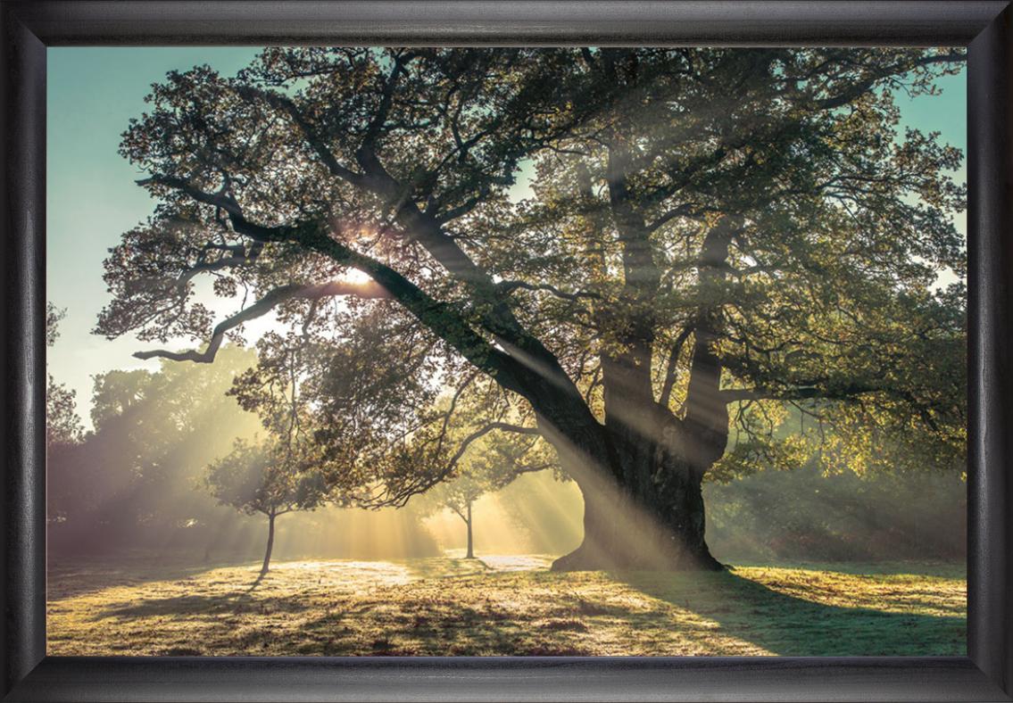 framed_image.jpeg