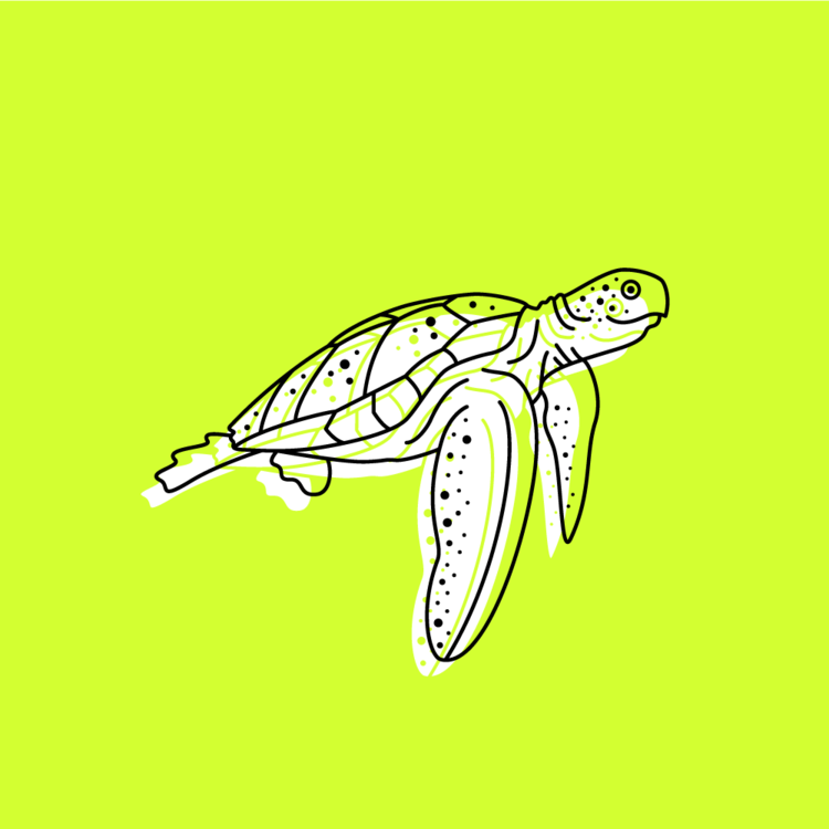 fish3_turtle.png