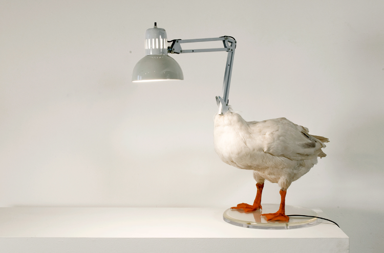 2004  Taxidermy goose, metal, acrylic paint, resin and lamp  20 x 23-1/2 x 15-3/4 in   ( 50,8 x 59,7 x 39,4 cm)   Rescued from the trashcan of an old taxidermy museum, the taxidermy bird with a broken neck get's given a new life as and reconstructed to become an iconic classic. The Duck Lamp by New York based artist and designer Sebastian ErraZuriz is an eerie, yet funny and beautiful object that explores the borders between sculptural and functional of both art and design.
