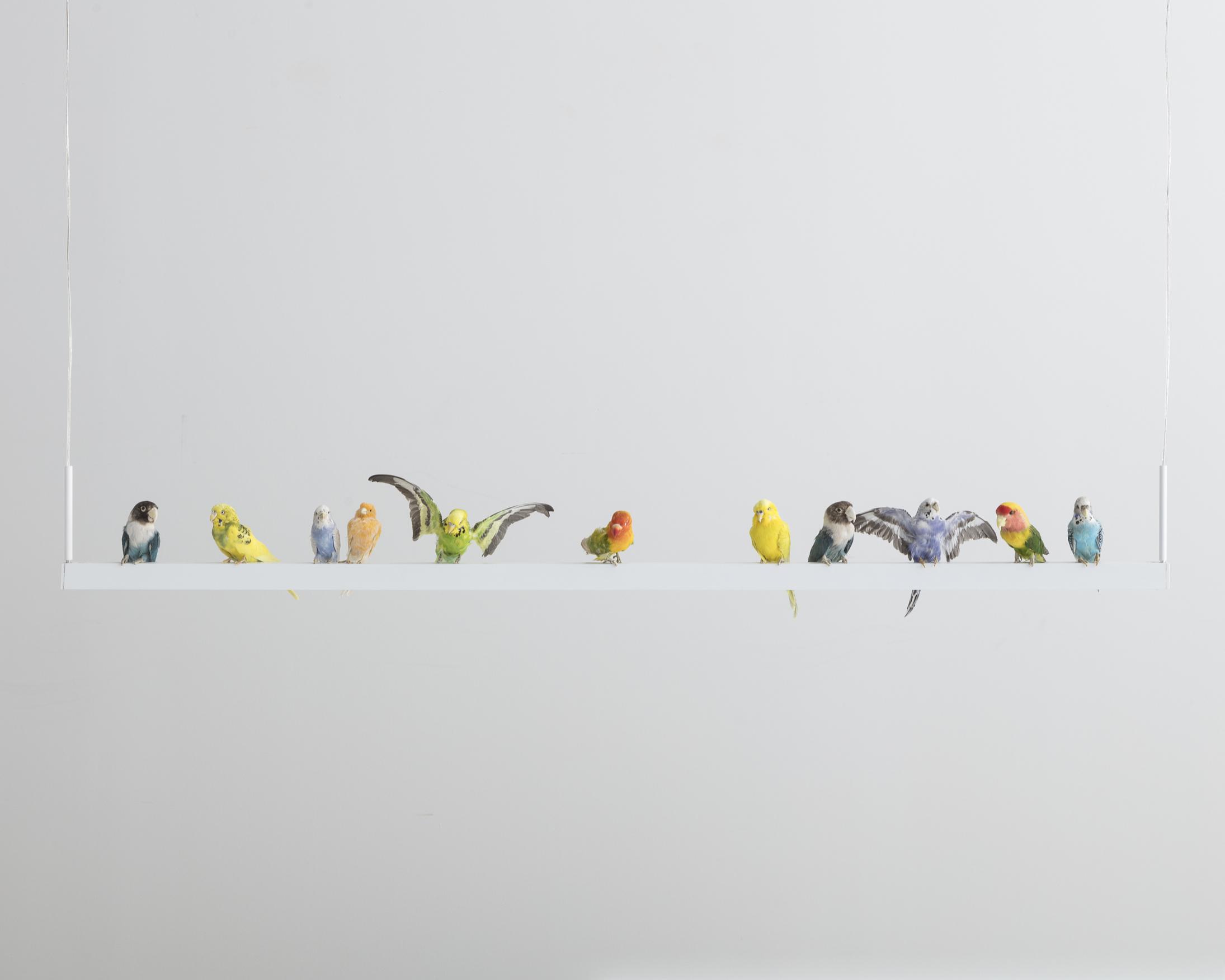 Neon Bird Lamp 1.jpg