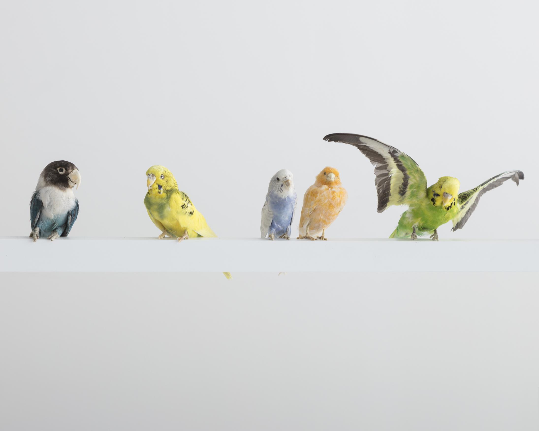 Neon Bird Lamp 2.jpg