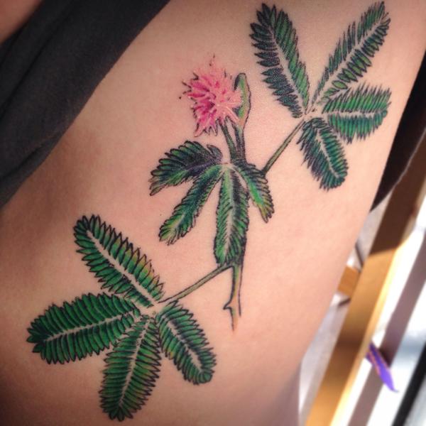 color Justin Turkus Philadelphia fine line lettering tattoo artist mimosa pudica sensitive plant.jpg