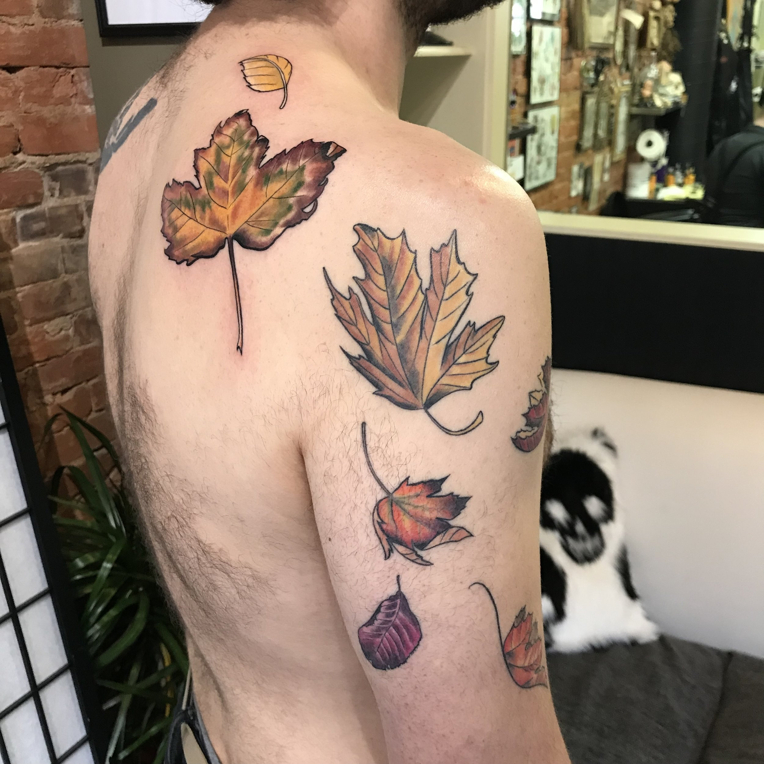 color leaves willy back birch beech maple flow March 2019.jpg