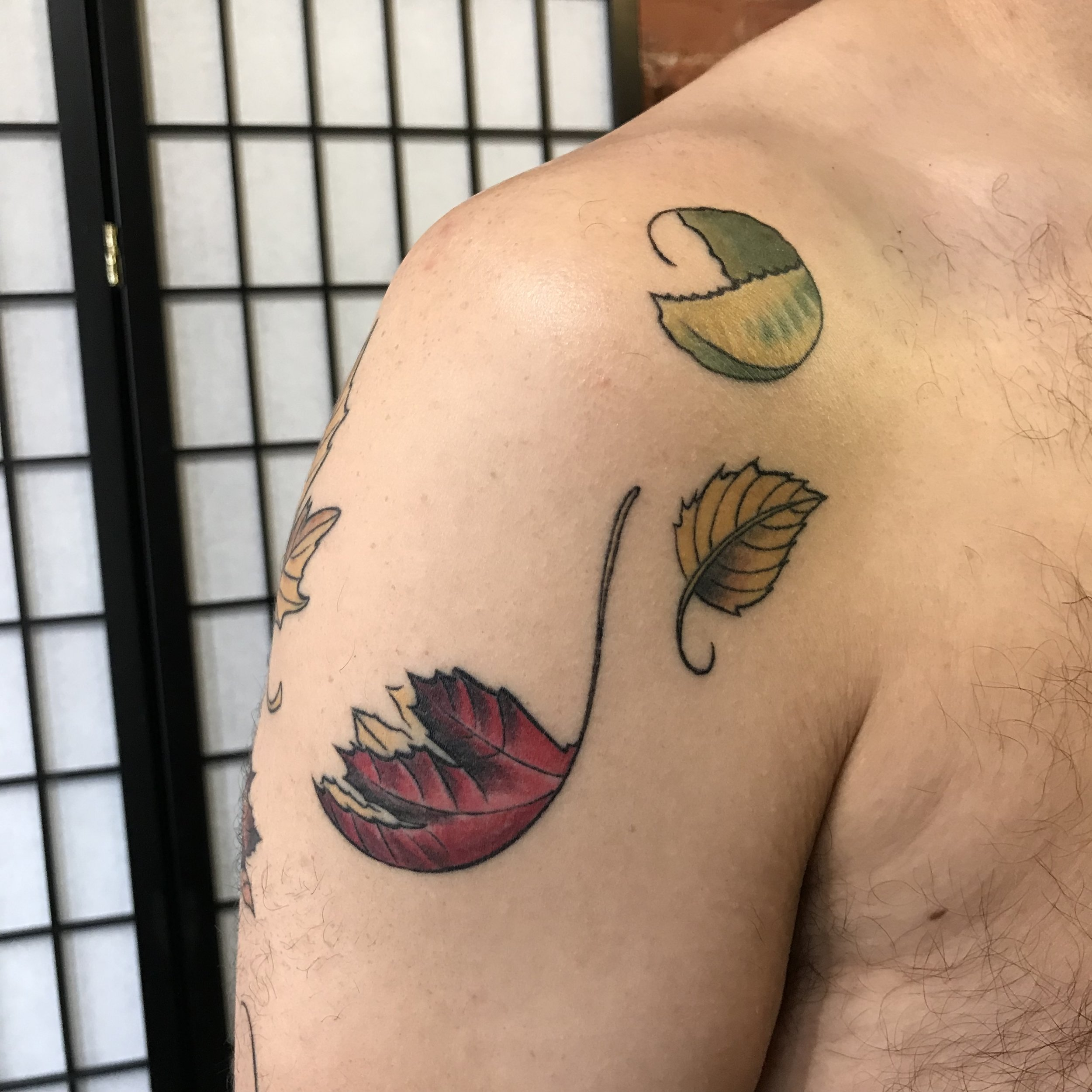 color willy leaves insta 2 front top maple birch beech Turkus tattoo March 2019.jpg