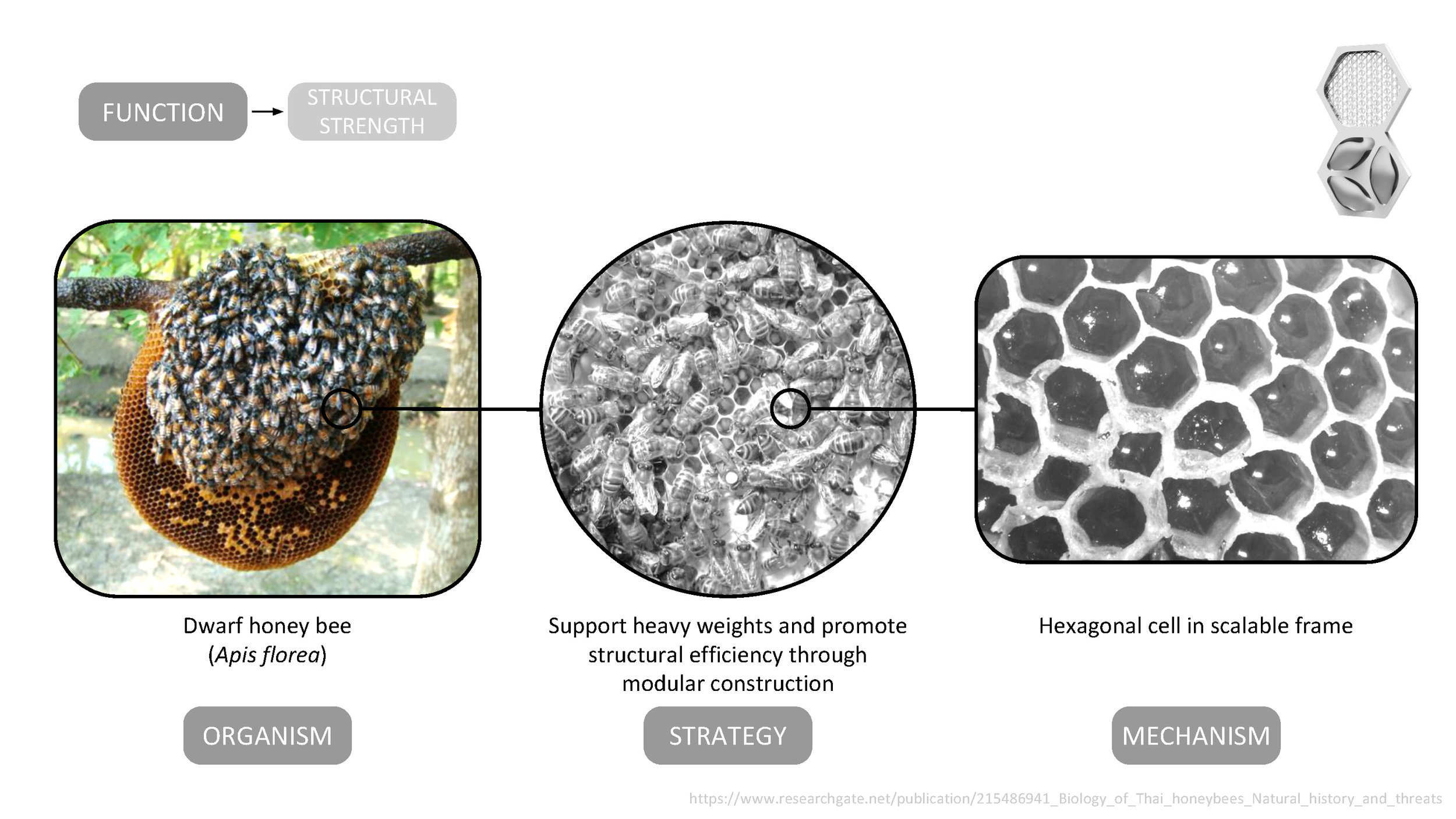 The AquaWeb emulates the hexagonal nest cell structure of the dwarf honey bee ( Apis florea ) to increase the strength of the modular system and reduce the amount of material needed to produce a robust and efficient structure.