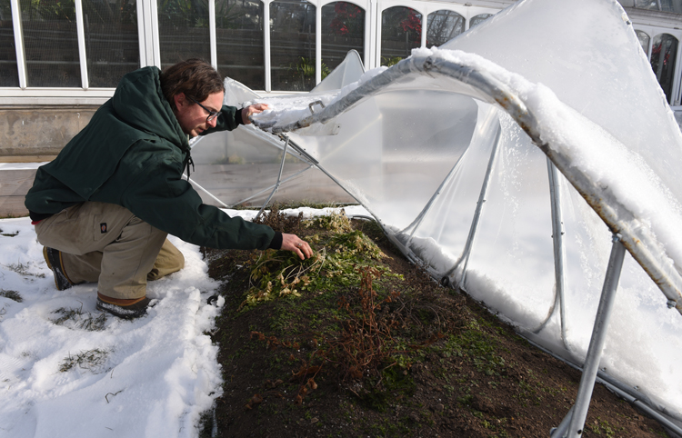 Michael Bechtel, edibles coordinator at Phipps, opens a cold frame to see what has survived. The cold frames on the Rooftop Edible Garden at Phipps Conservatory and Botanical Gardens were designed, constructed and installed by architecture students from Carnegie Mellon University. It's part of a joint project between the school and conservatory. Photos by Doug Oster