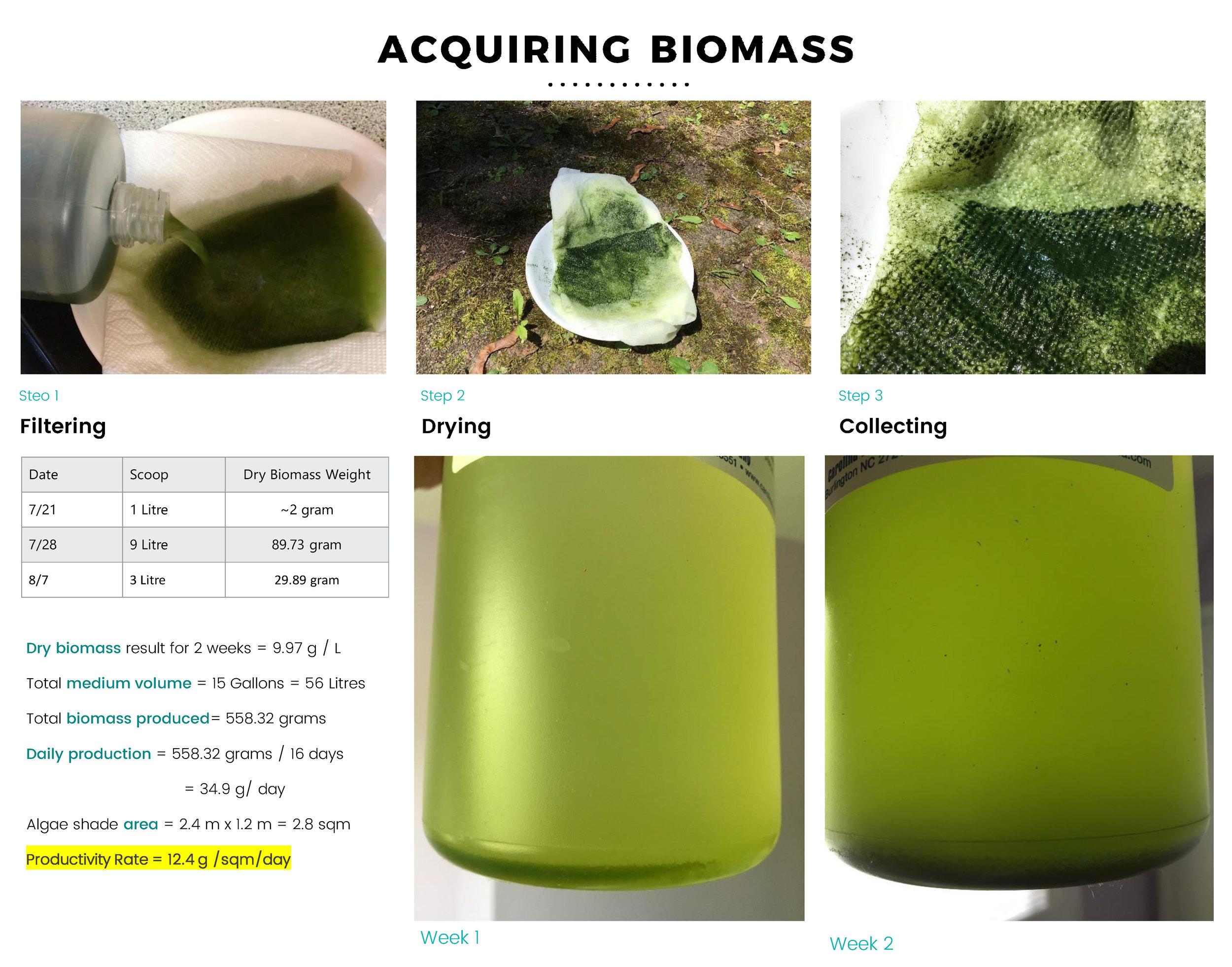 Algae Bioreactor as an Integrated Building Facade  (S17) | Fauzan Wassil (MSSD 2017)