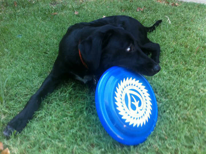 Josh Moon  sent us this picture of his dog gnarin' up an old T&L frisbee! Thanks Josh!