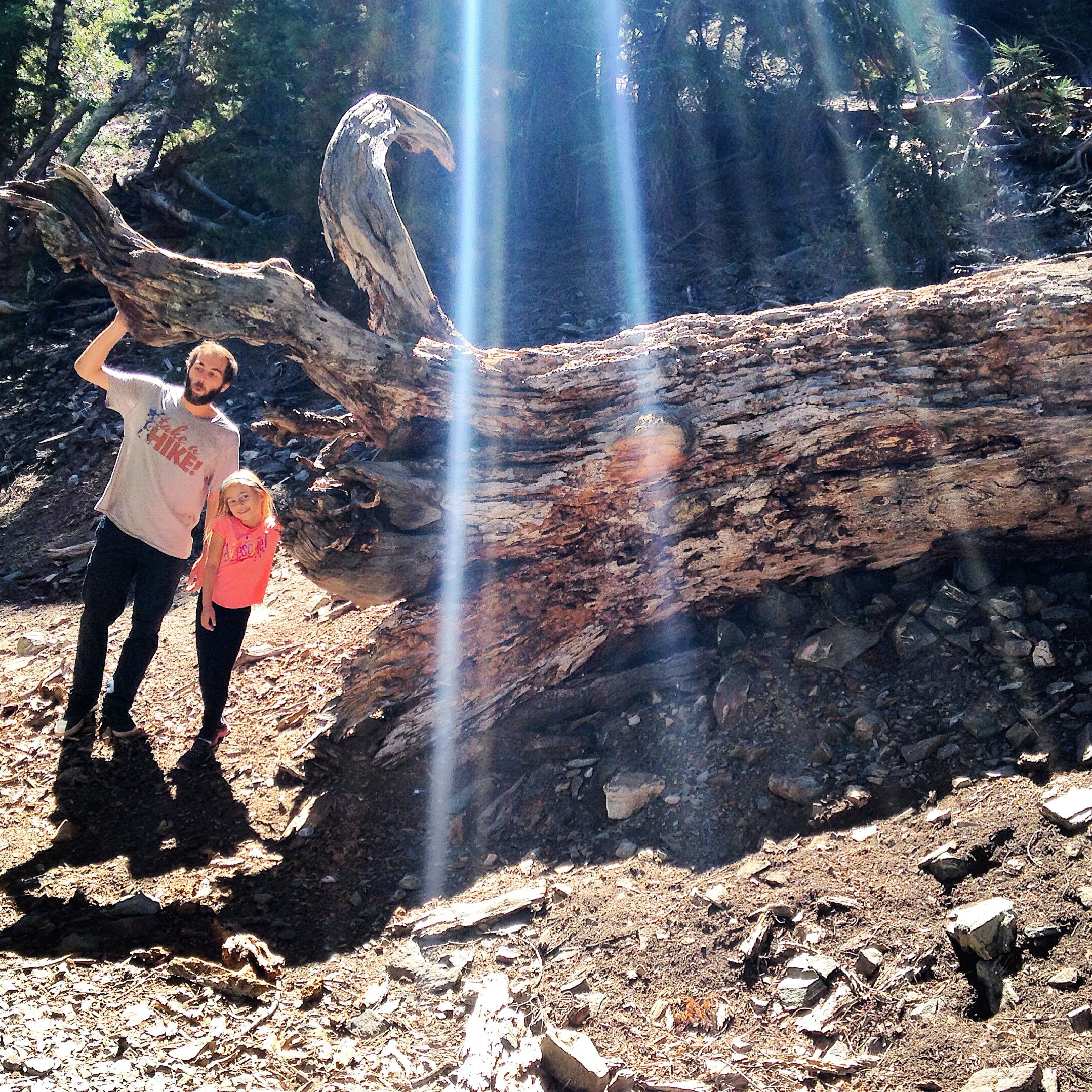 Within the first couple hundred feet of the hiking trail there were several enormous fallen trees. We had fun climbing on them.