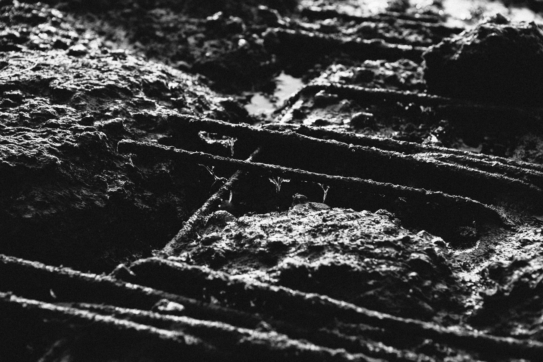 blackshore_068-2.jpg
