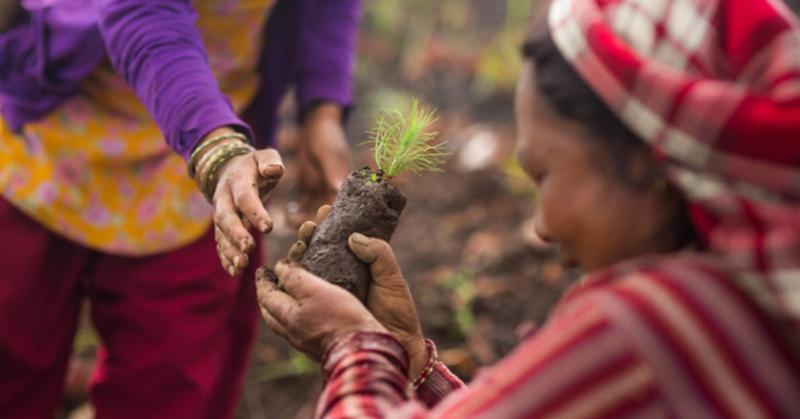 Lead image from TreeSisters.jpg