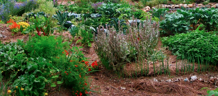 ECOLOGICAL GARDENING: Improve the health and reduce the environmental impact ofyour garden with our ecologicalgardening services.