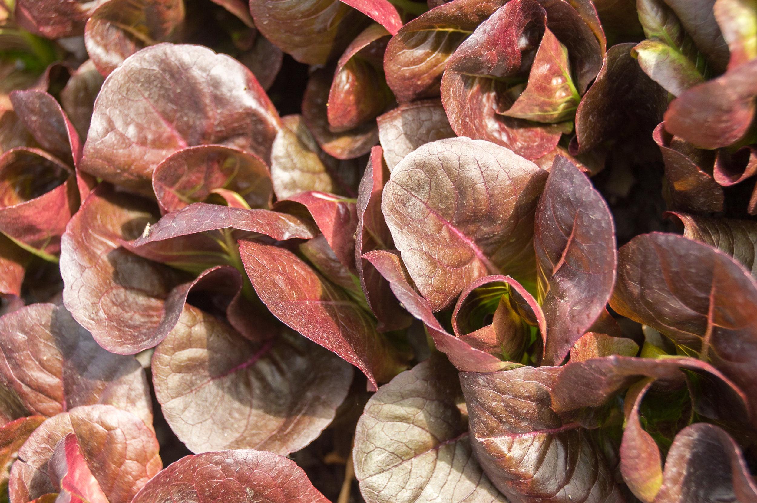 AGRICULTURE URBAINE : La coop Bioma vous accompagne pour créer des systèmes de production alimentaire adaptés à vos espaces!
