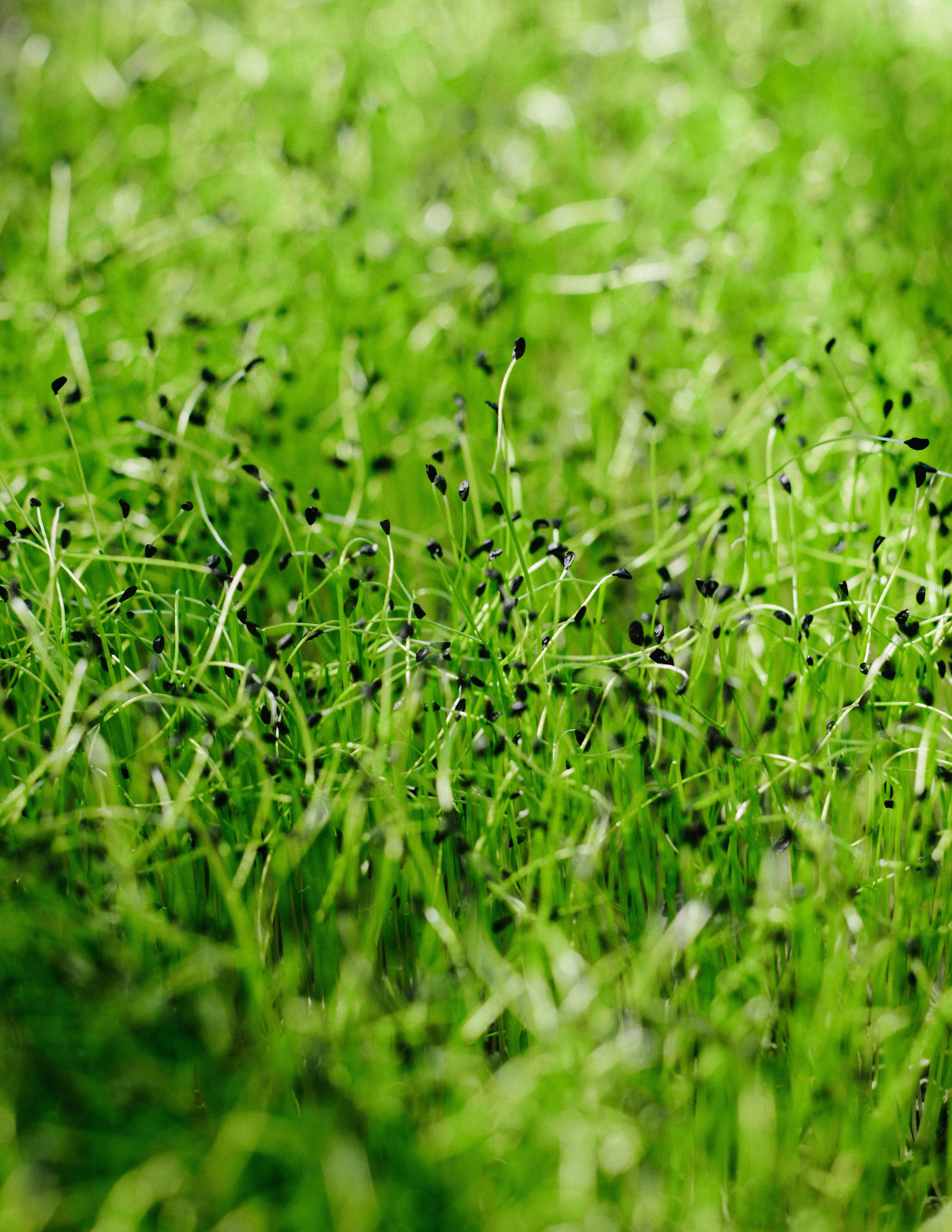 Microgreens photographed by Adam DeTour
