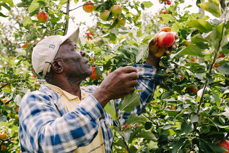 Portrait of Farmworker