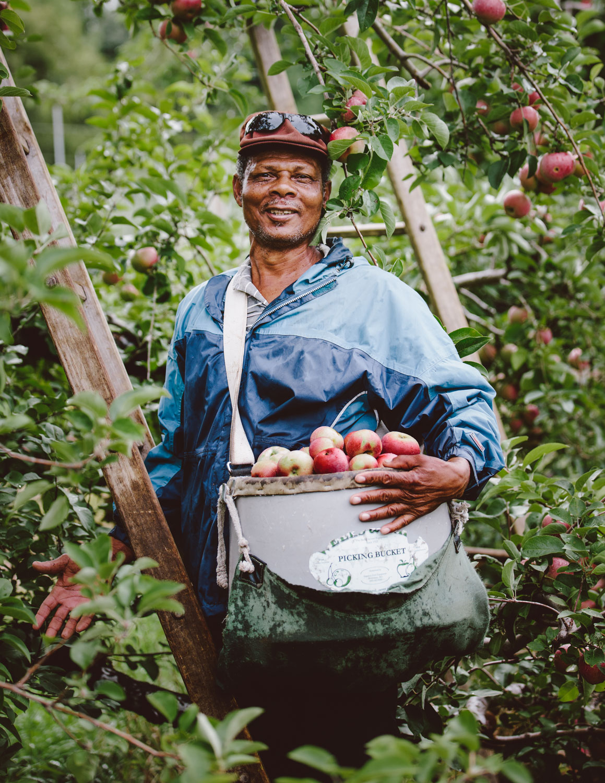 Portrait of apple picker by Adam DeTour
