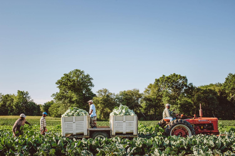 Lifestyle farm photo by Adam DeTour