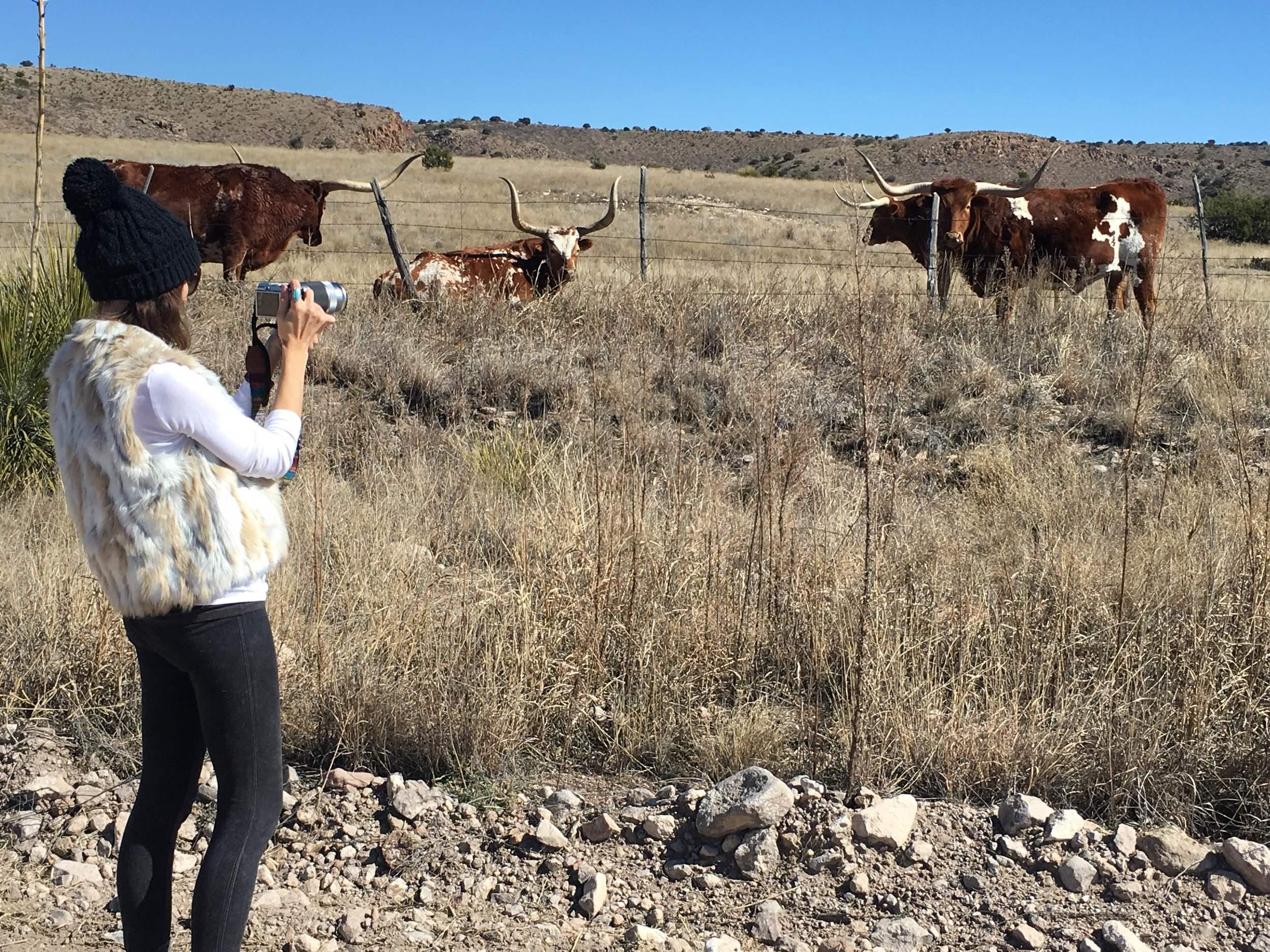 Rachel photographing Long Horns in Texas.