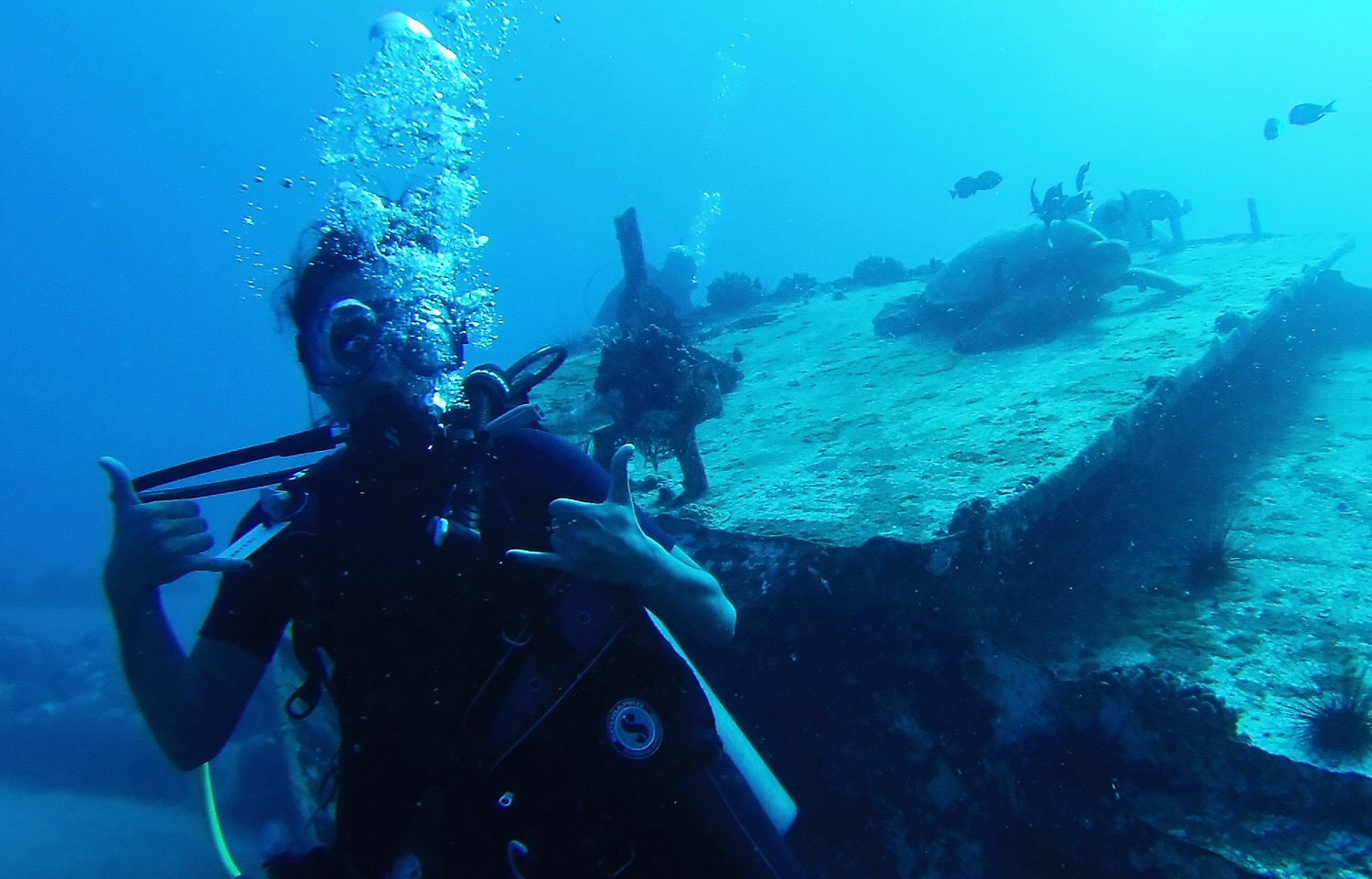Wreck diving at the sea turtles cleaning station