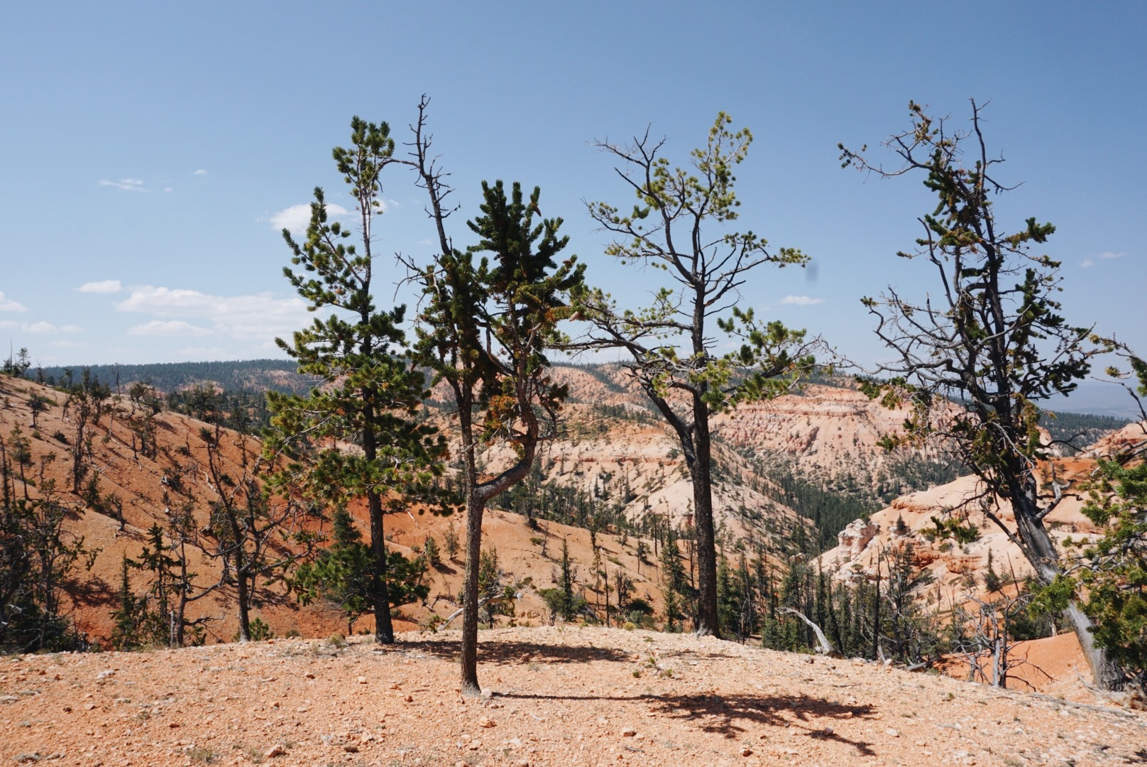 chrissihernandez-utah-bryce-canyon (13).JPG