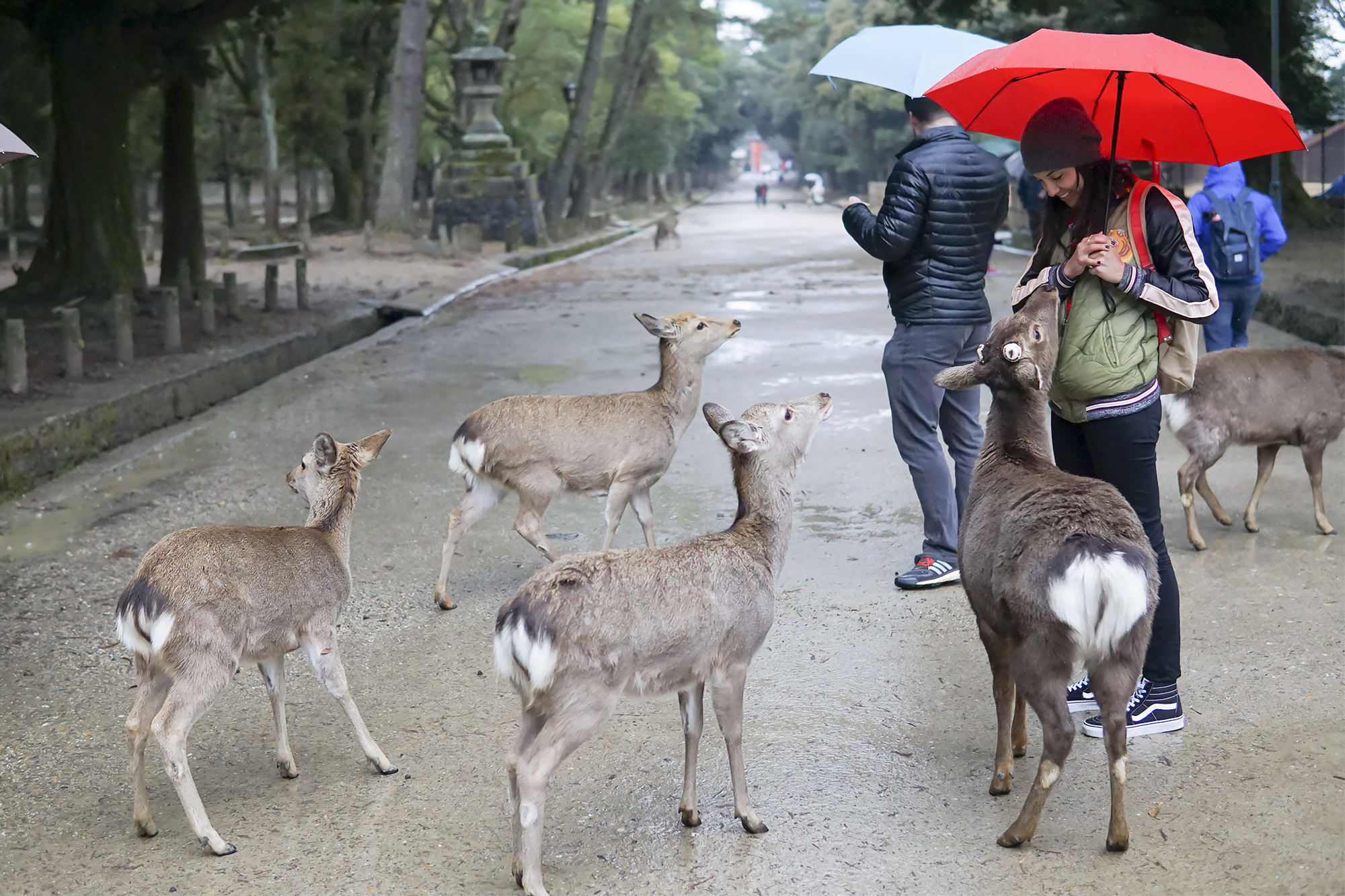 chrissihernandez_japan-narapark.jpg
