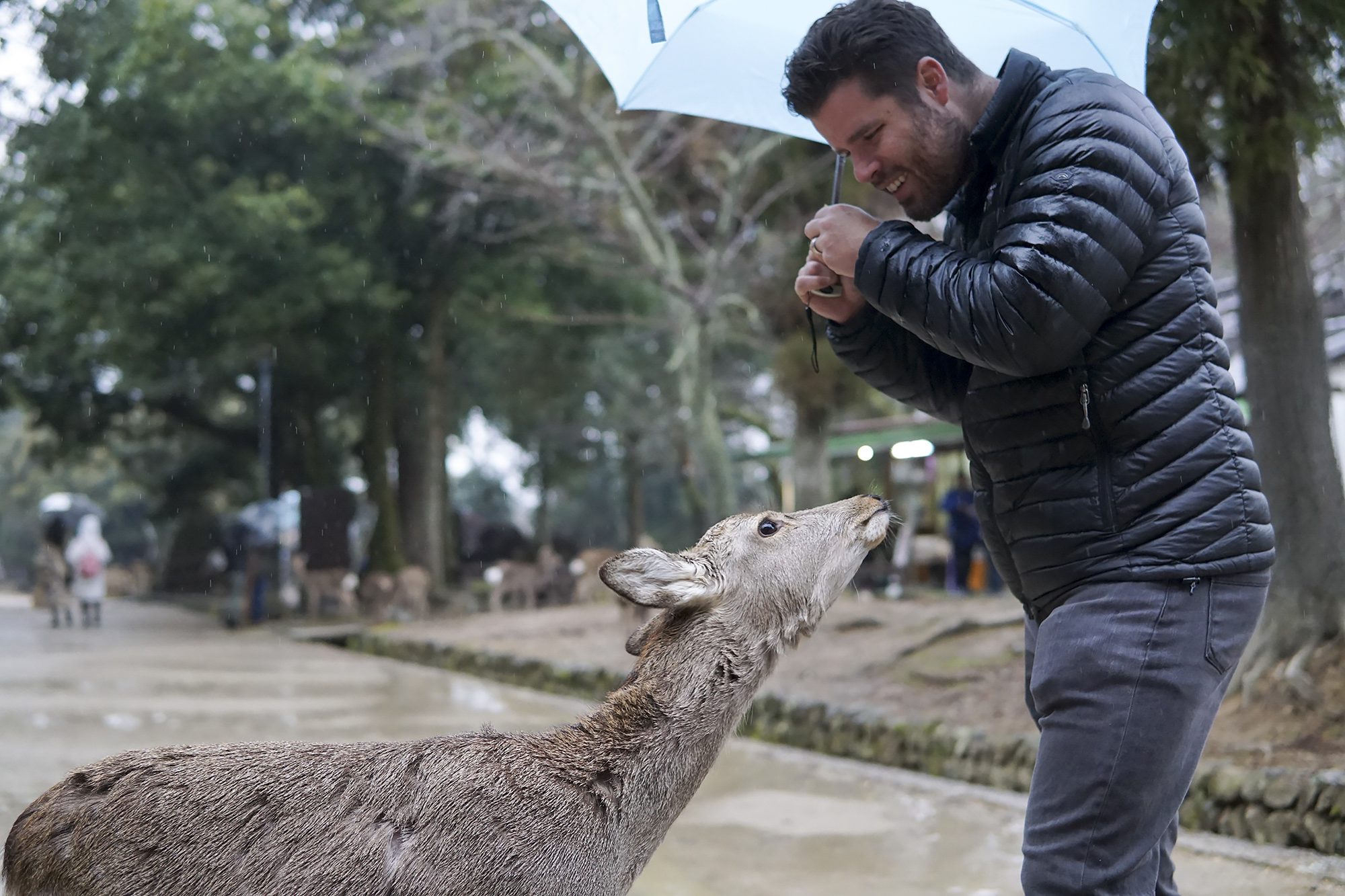 chrissihernandez_japan_narapark-deer.jpg