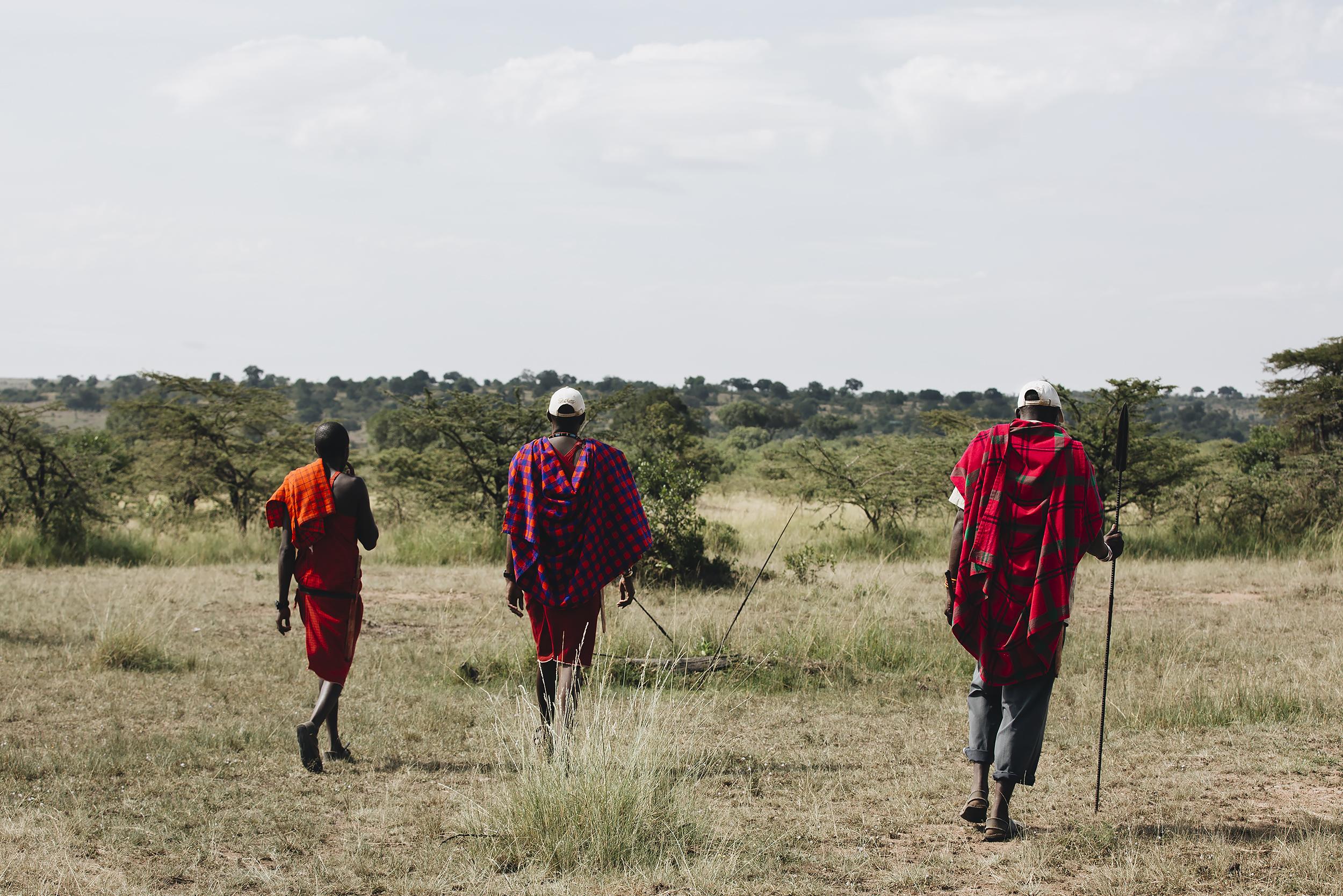 Masai Warriors Guiding the Way