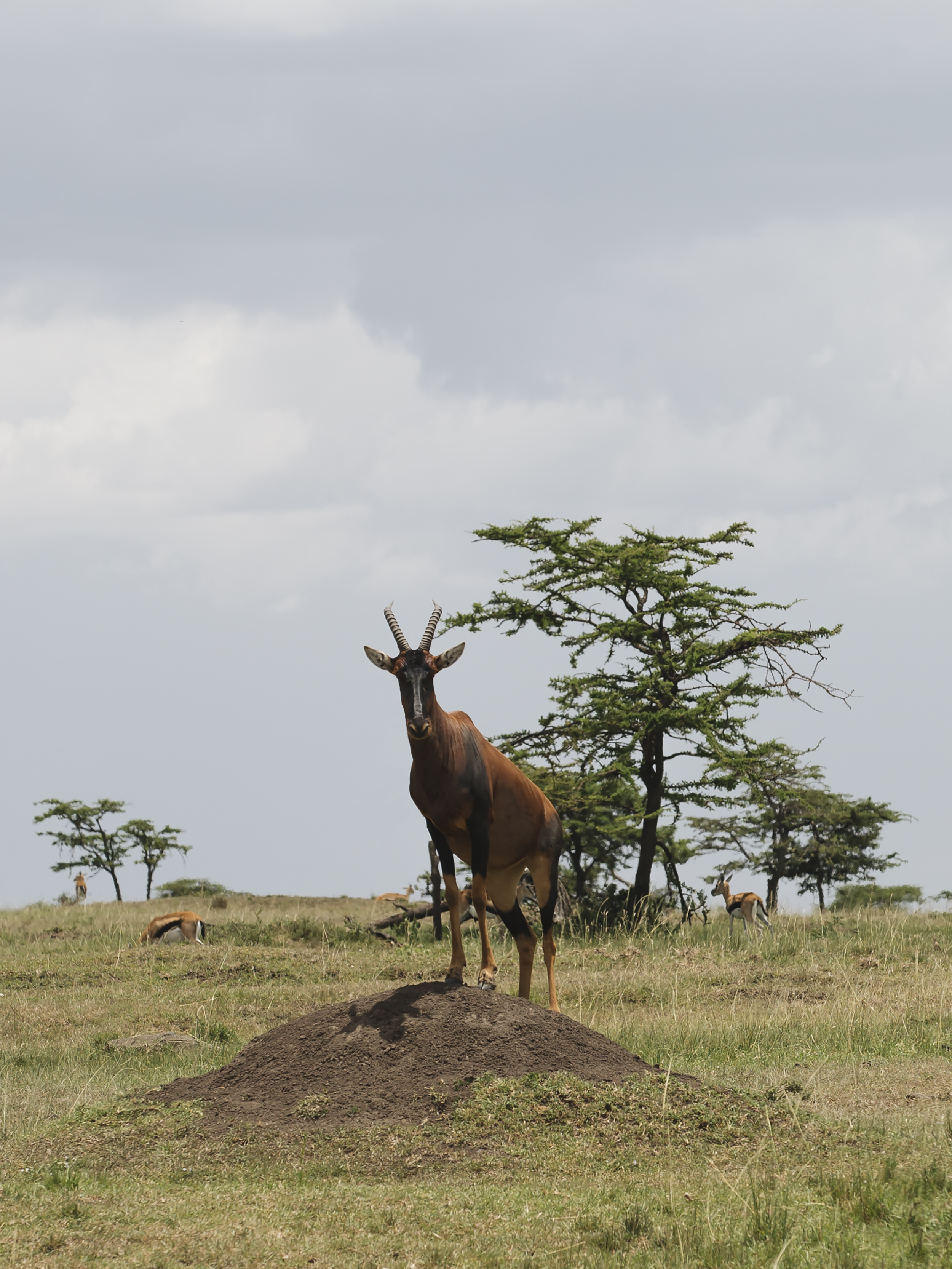 Topi on the Mound
