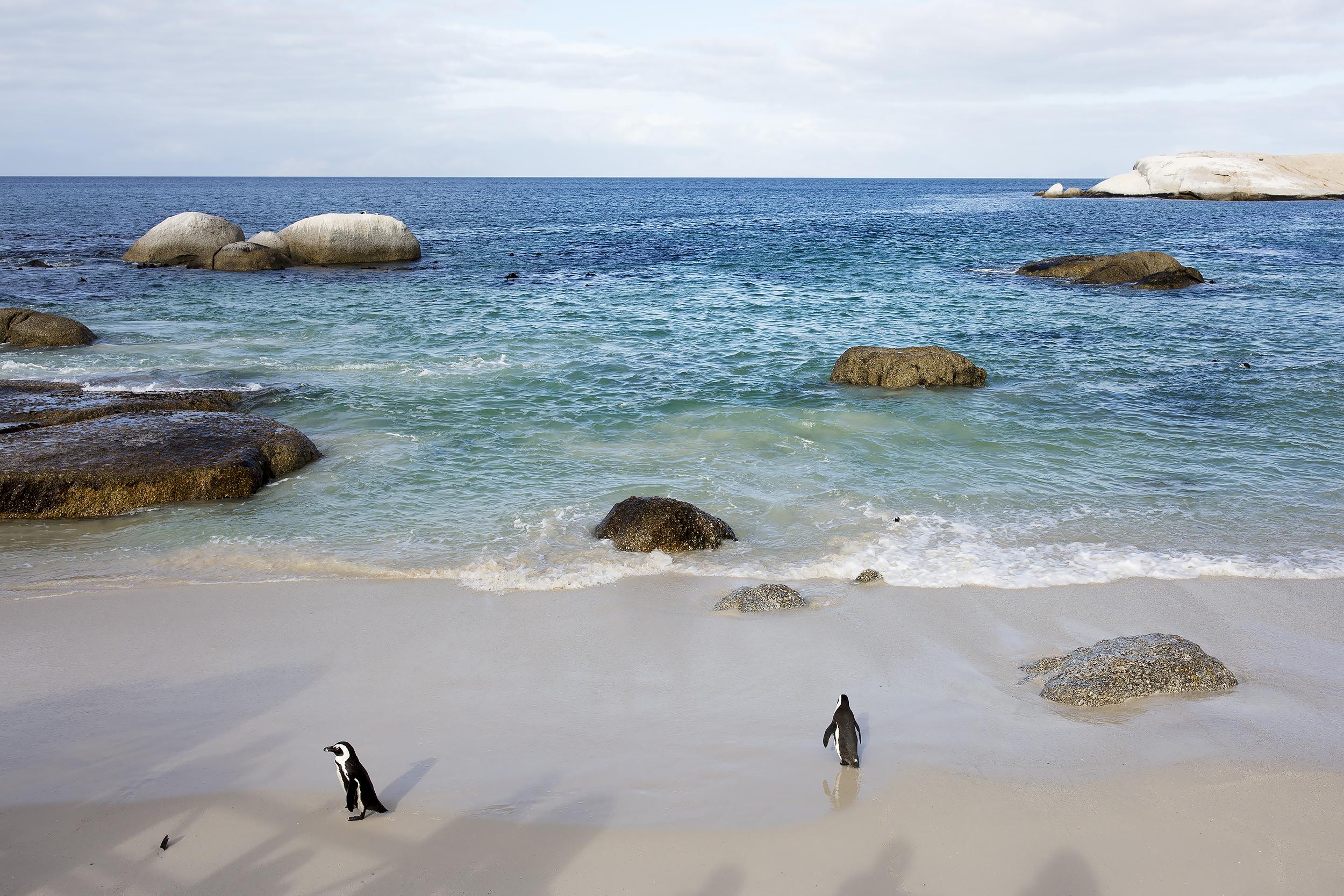 chrissihernandez-southafrica-capeTown (561)copy2500.jpg