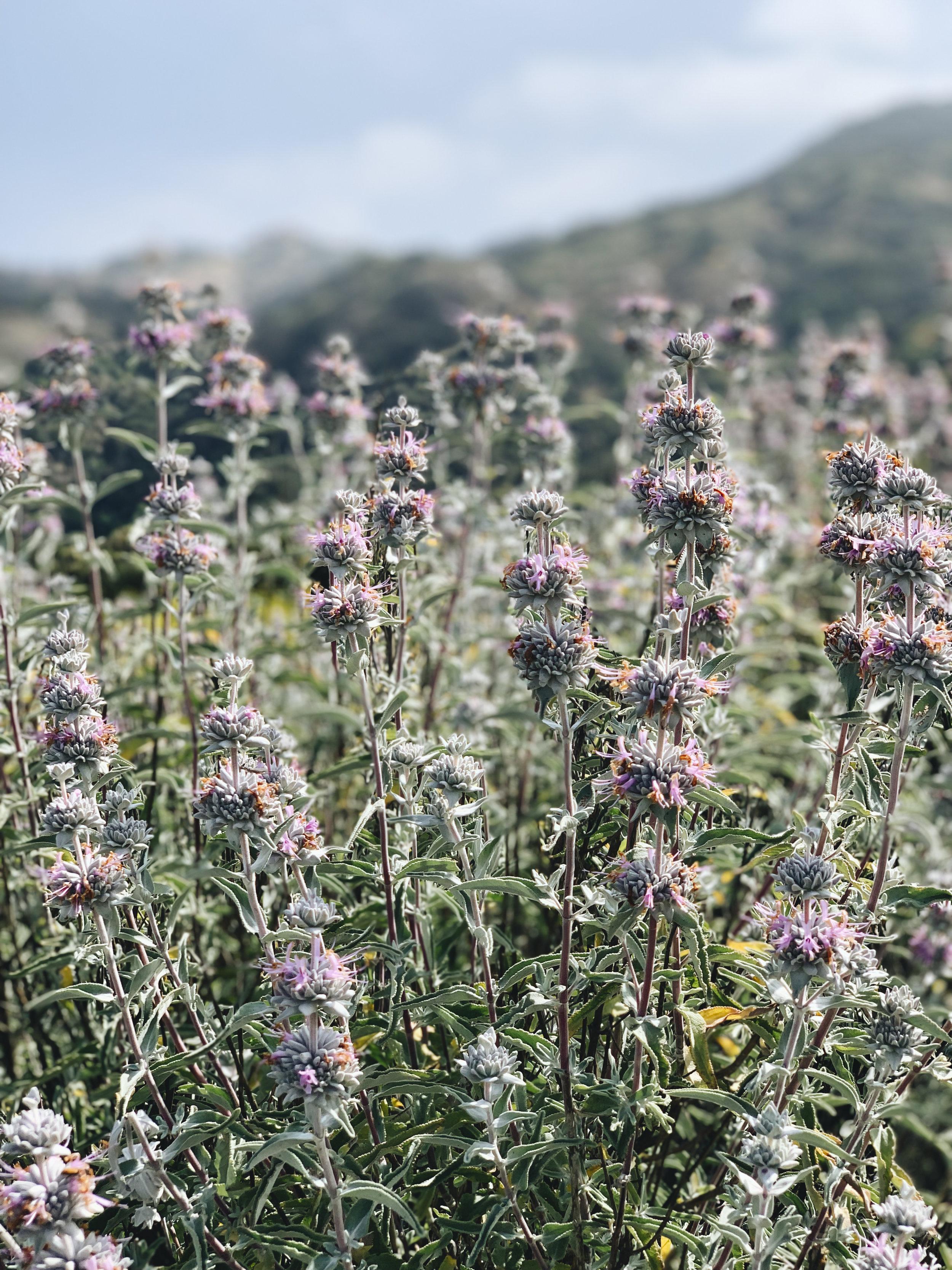 chrissihernandez-california-losangeles-eaglerock (1).jpg