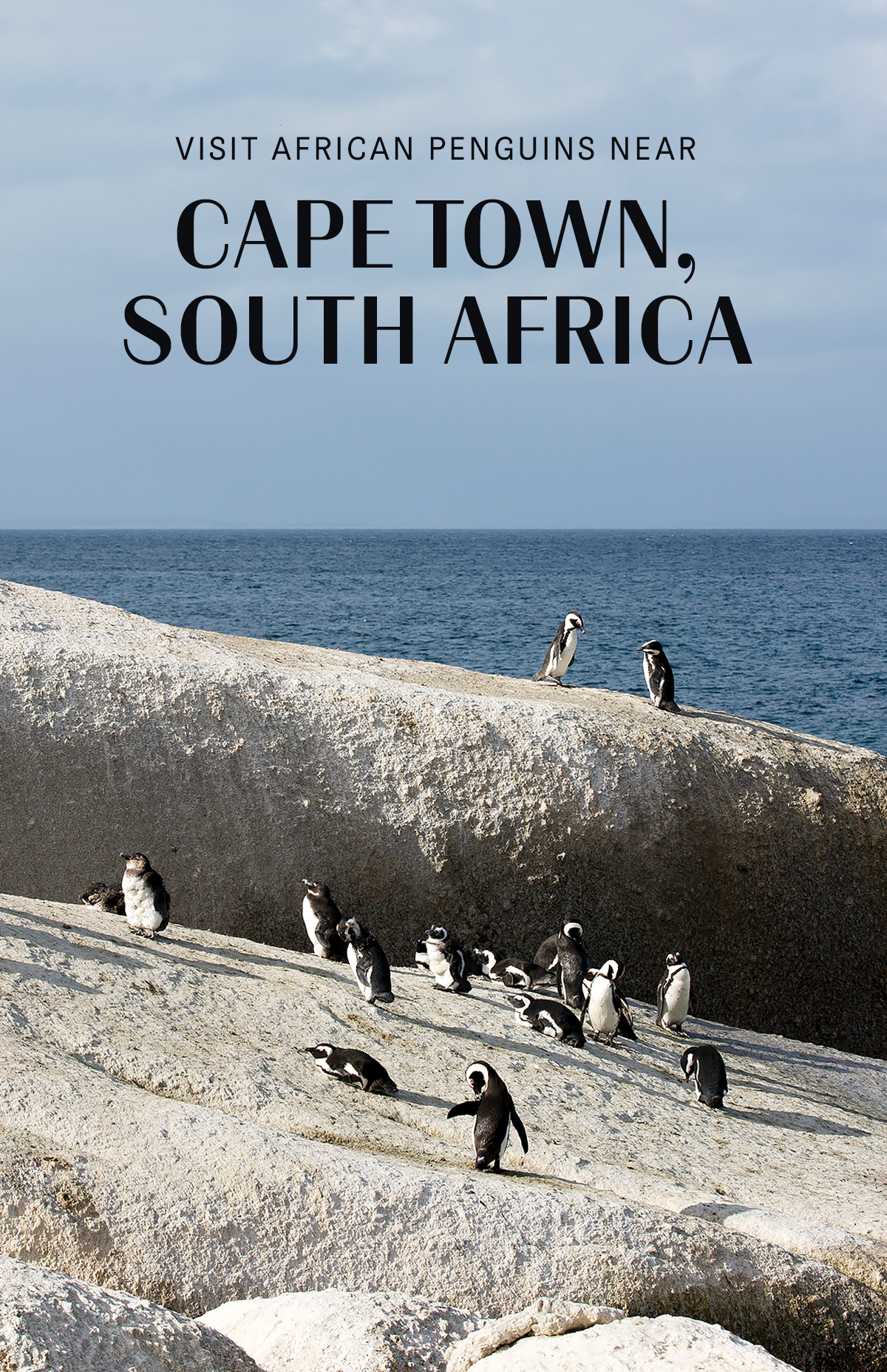 social-chrissihernandez-pin-cape-town-africanpenguins-03.jpg