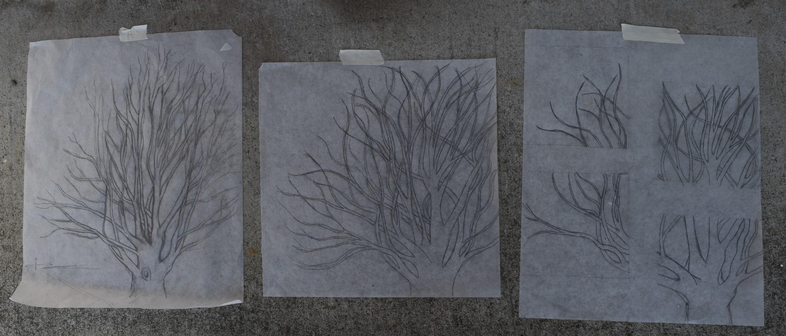Figure 2: Progression of the tree sketch.