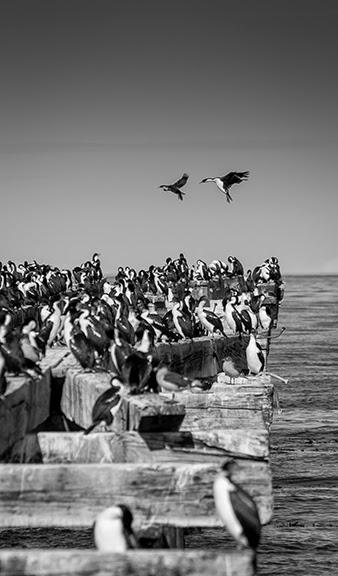 14April_Punta+Arenas_011.jpg