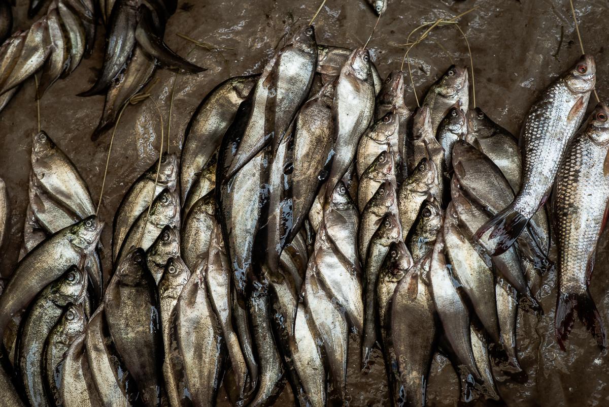More fish for sale. Inle Lake, Myanmar