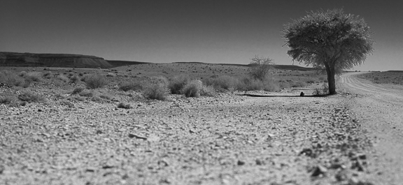 On the way out of the Fish River Canyon...A lonely tree