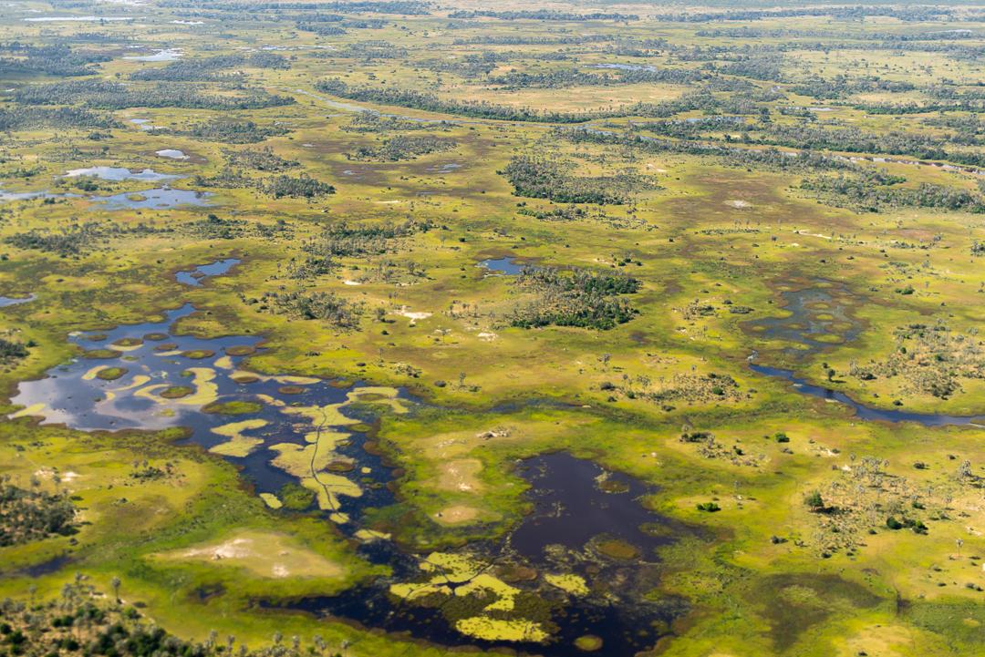 The Okovango Delta