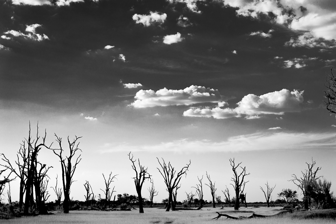 Beautiful African landscape. The trees are dead because this area floods every year and there is too much water.