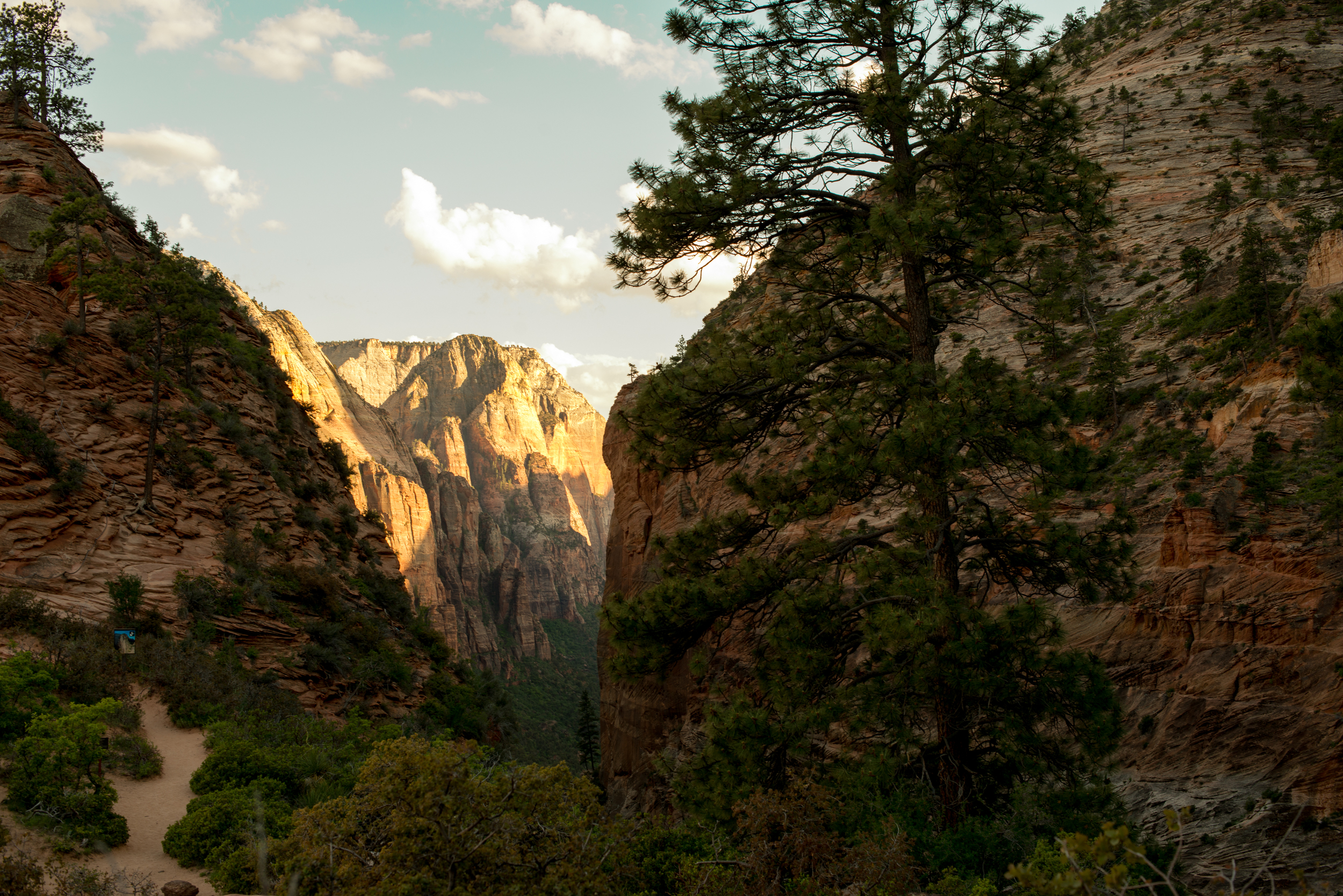 Scout's Lookout...Zion National Park.  Amazing.