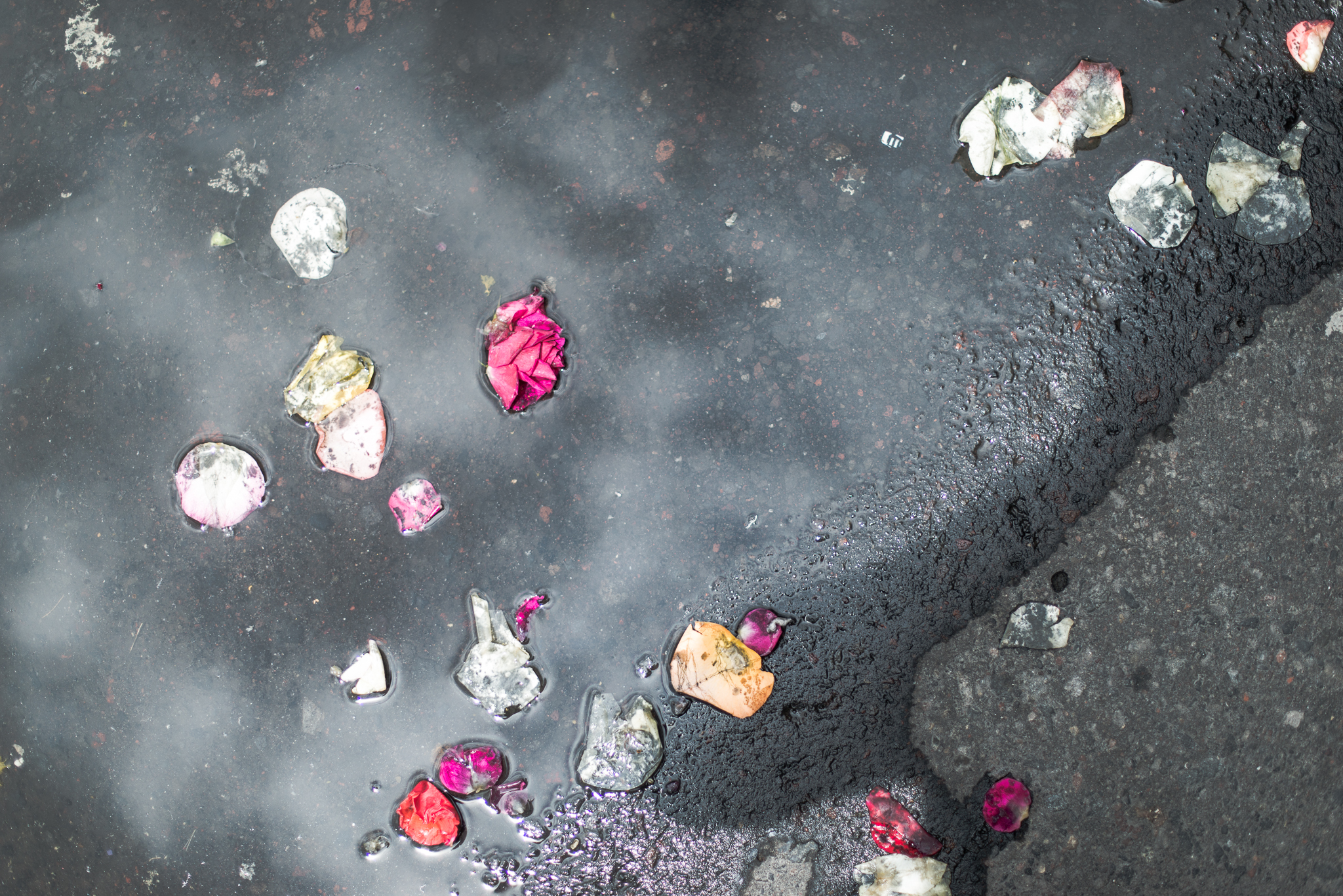 Rose petals after a religious procession...Old Town, Quito