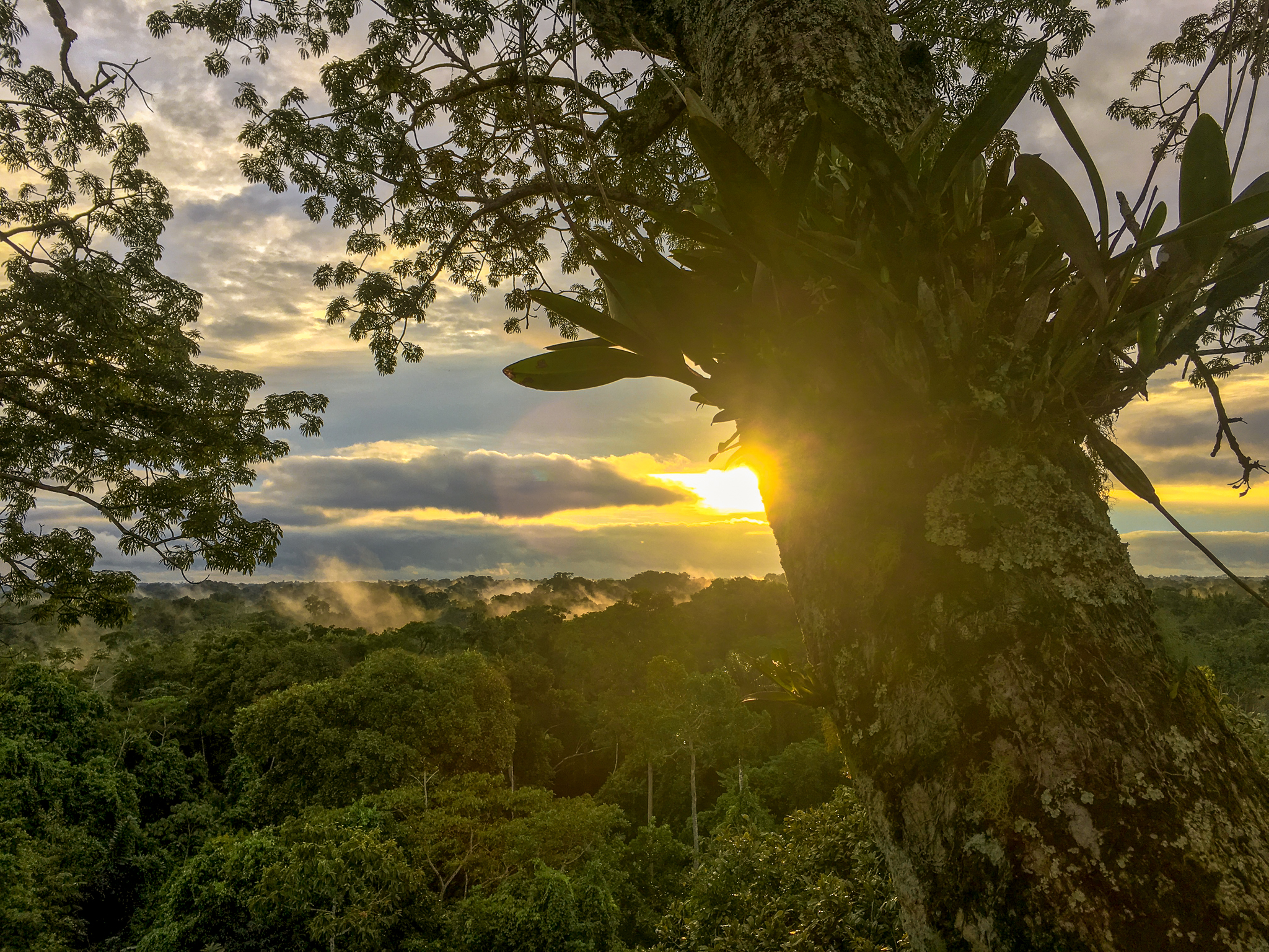 Final Sunset in the Amazon from the tree tops...