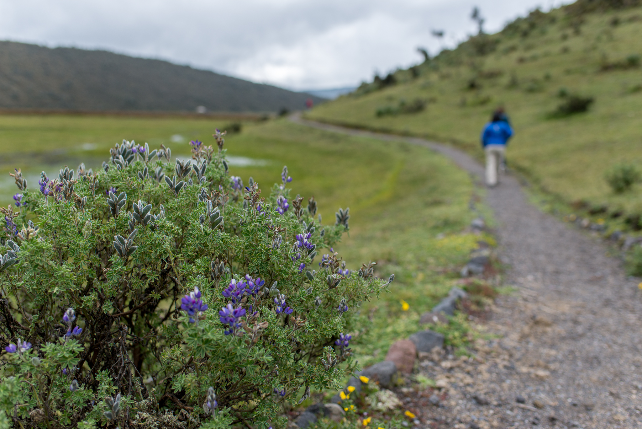 Hiking Around A Lagoon...Cotopaxi National Park...