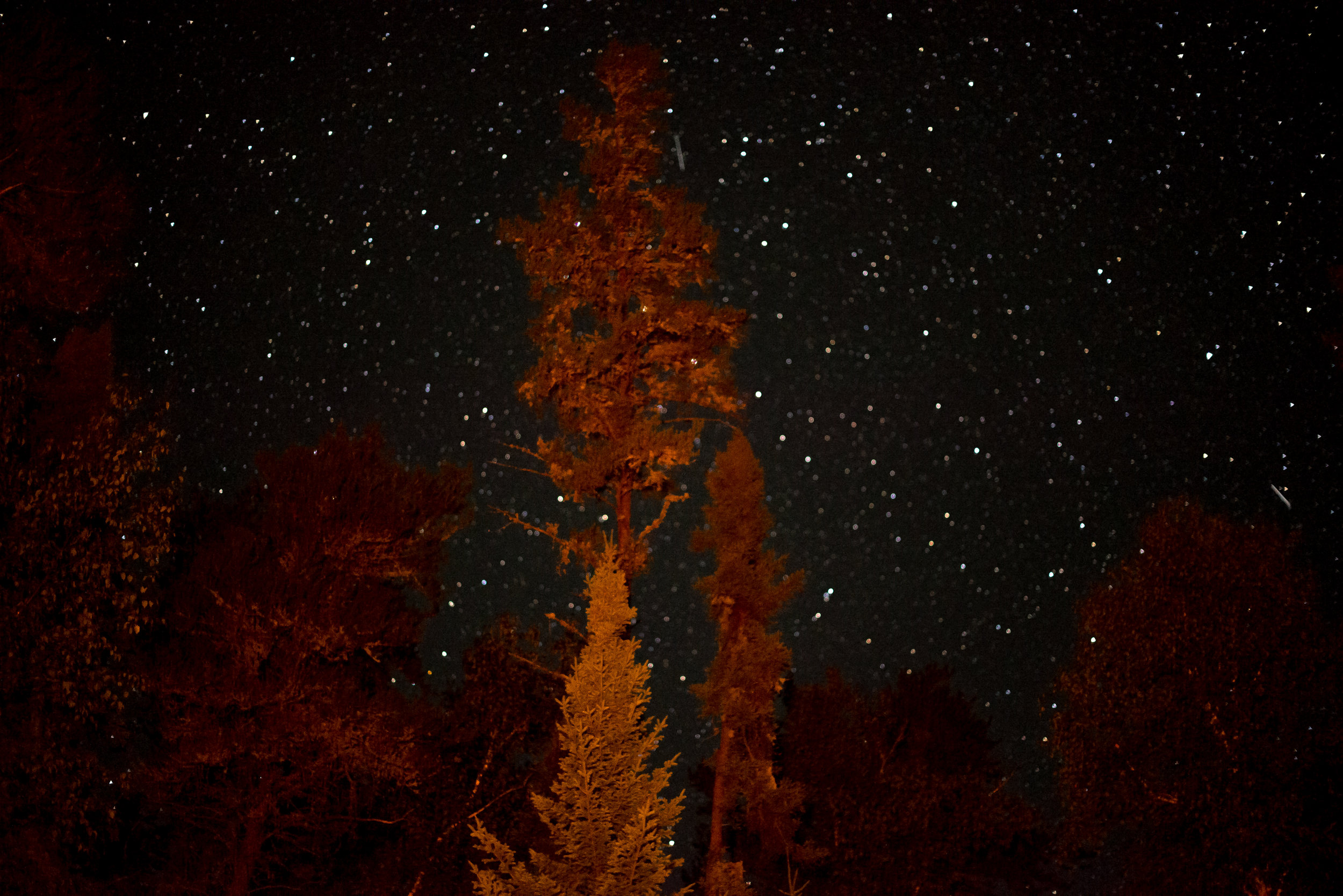 Star Photo With The Trees Lit By The Firelight...