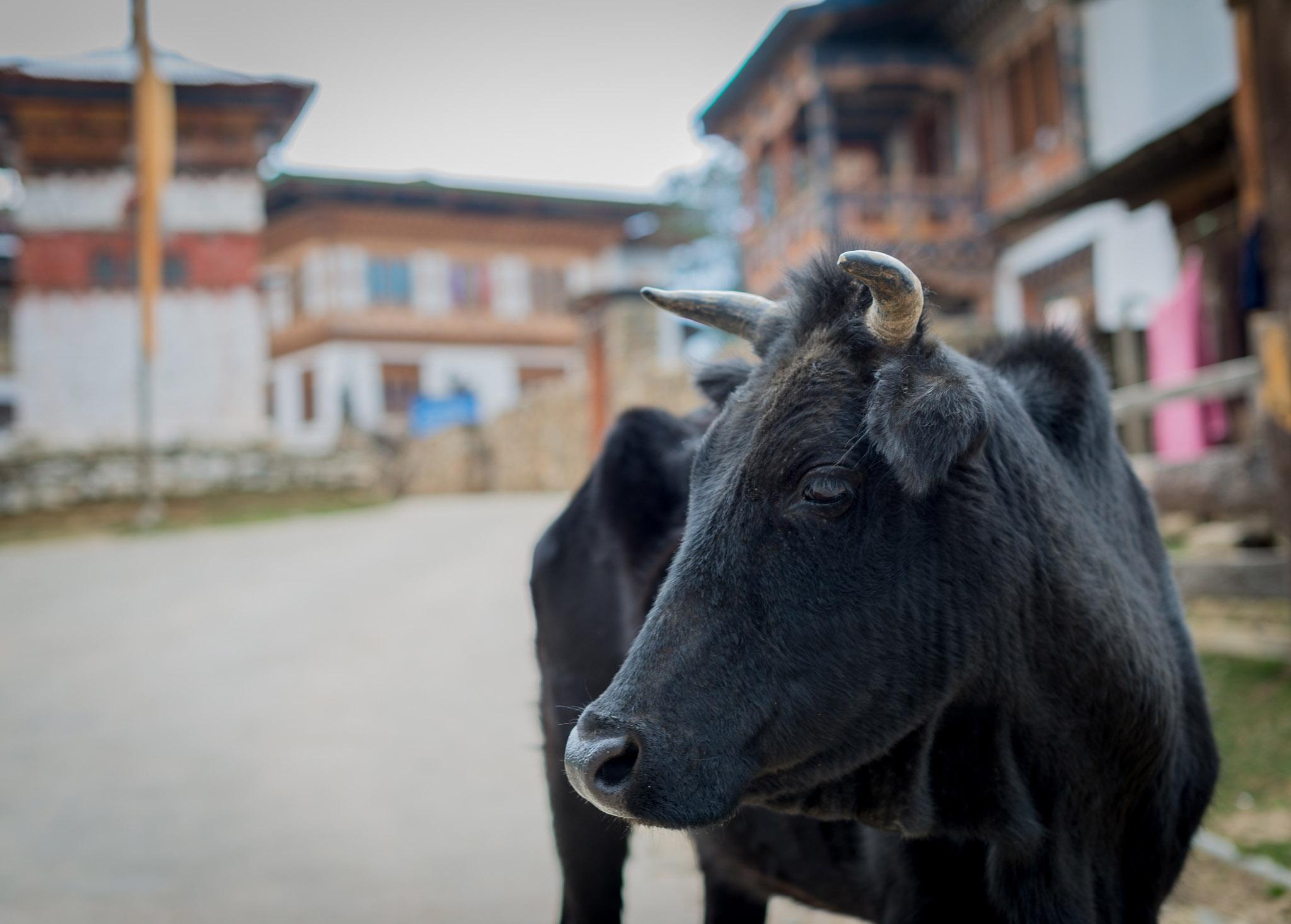 18March_Bhutan Gangtey Day 3_1362.jpg
